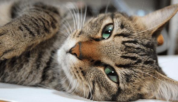 419 cat
