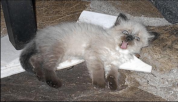 524 cat