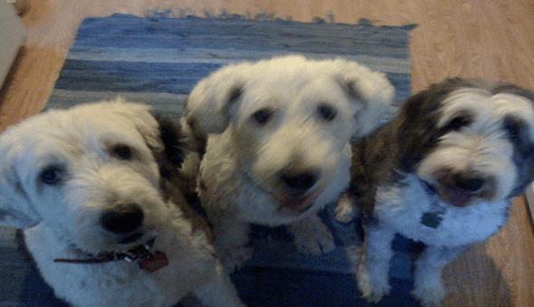 6-1 dog