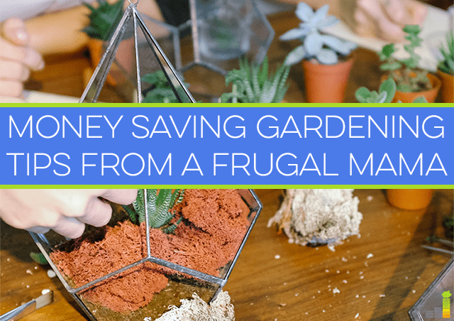 Money saving gardening tips from a frugal mama frugal rules - Practical tips to make money from gardening ...