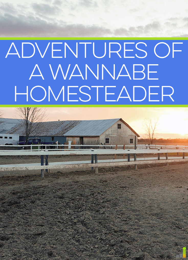 A homesteader is someone thought of who lives in the country. While we do, here are some simple tips to live as a homesteader regardless of where you live.