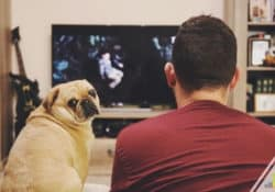 Our Philo TV channels list shows how you can get your favorite shows for $25 a month. Read our analysis to see why it's a good cable alternative.